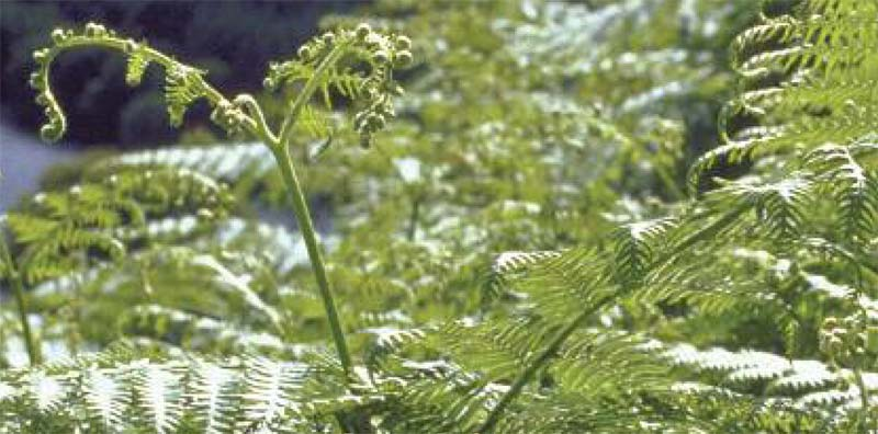 Image of Bracken Control-Don't miss the time limited deadline
