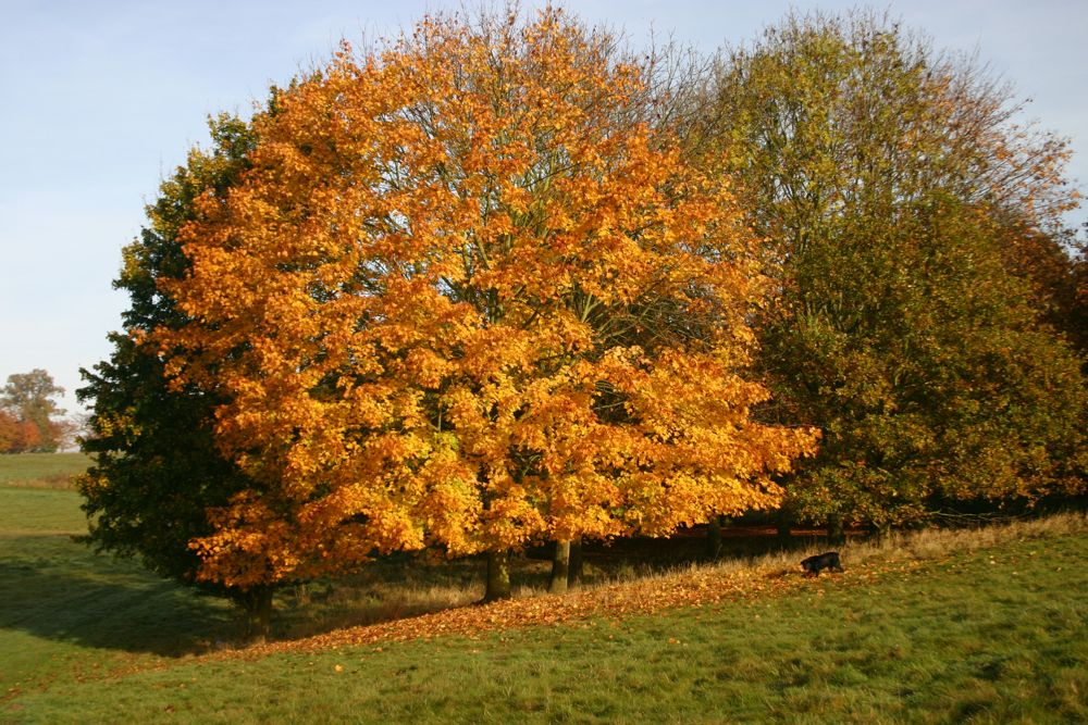 Tree Reshaping: Tree reshaping carried out on all types of trees throughout Gloucestershire, Herefordshire, Gwent, Powys, Ceredigion, Carmarthenshire, Pembrokeshire and Bristol areas.