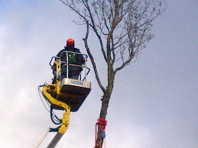 An image of Sectional tree felling in progress using our MEWP for access goes here.