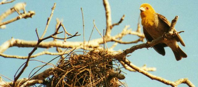 Image of The nesting bird season in Britain is nearly over.  Now's the time to think about your trees.
