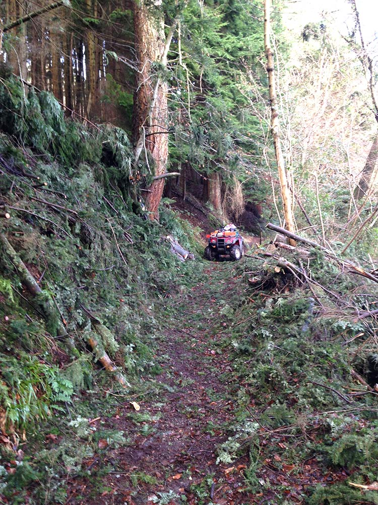 An image of Windblown tree removal near Tintern, Monmouthshire goes here.